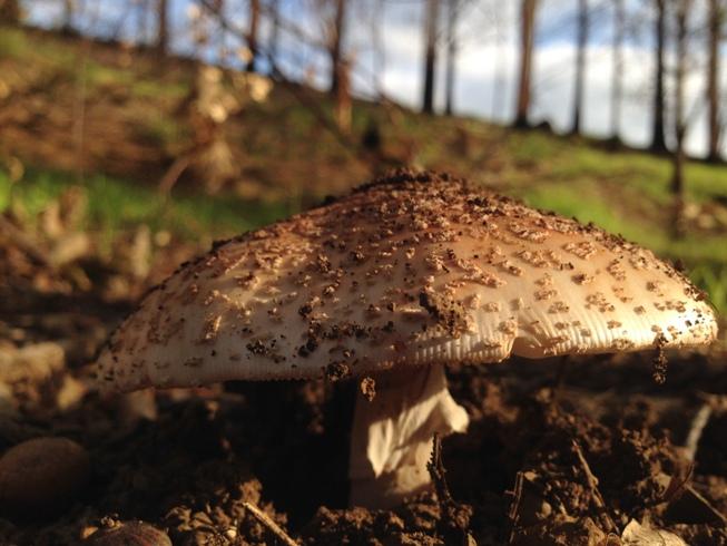 Fungi-Fever at Delheim