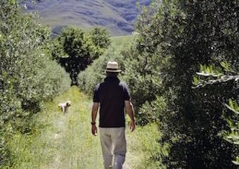 Upper Blaauwklippen Vintners beckon to best-kept-secret Stellenbosch Tasting