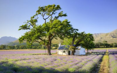 La Motte shines in 2018 Drinks International Wine Tourism Awards