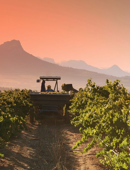 Stellenbosch has everything to make the perfect wine