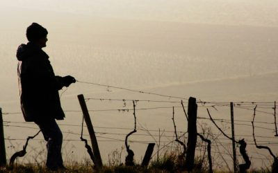 SA's ongoing drought: what does it mean for wine investors?