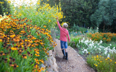 TOKARA Autumn Open Garden and Annual Rare Plant Fair