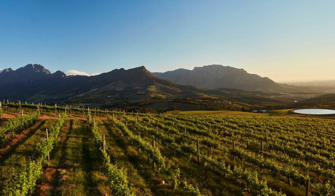 Liquid gold flows from TOKARA's olive groves