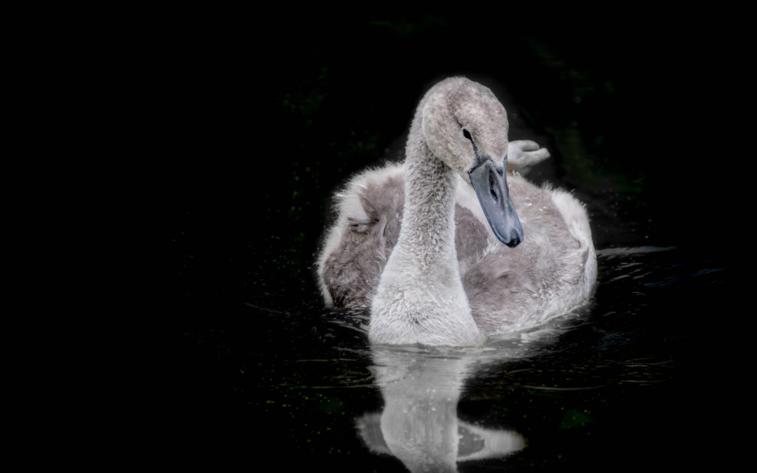 Shades of grey – understanding grey swans