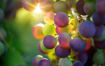 WoSA positive about wine industry in 2020