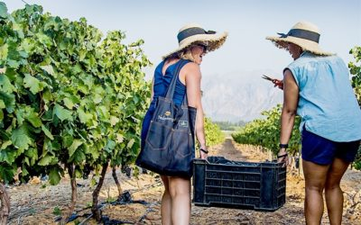 Things to do this weekend in the Winelands