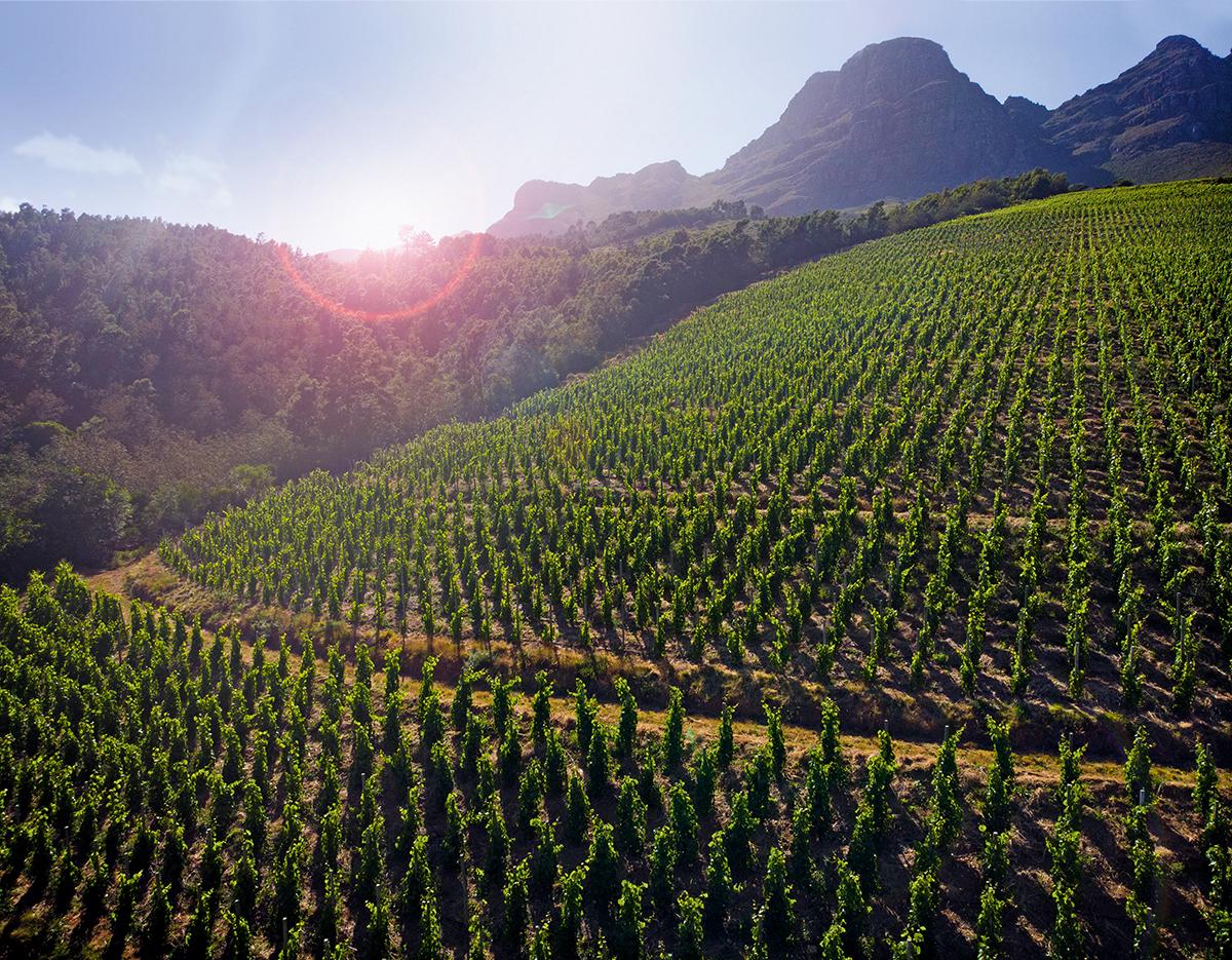 Uva Mira Mountain Vineyards